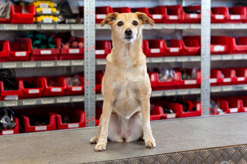 Behrens Parts Ladebordwand Ersatzteile Lkw Shop Landerampe Hund