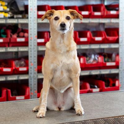 Behrens Parts Ladebordwand Ersatzteile Lkw Shop Landerampe Hund Quadrat